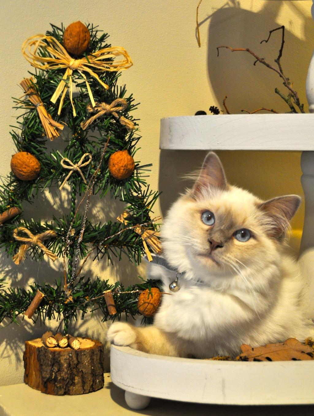 Noël et Tchoupi
