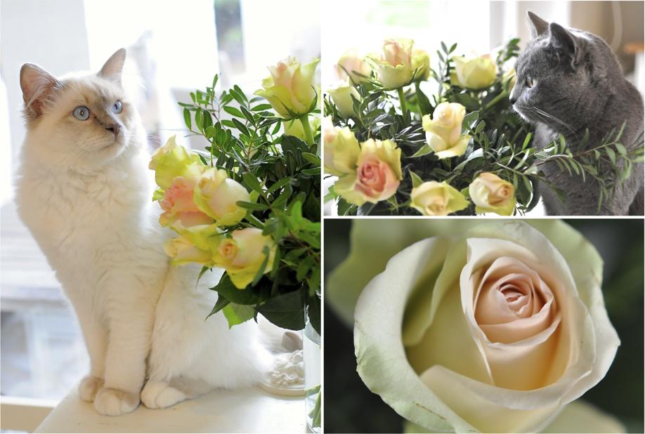 st valentin chats